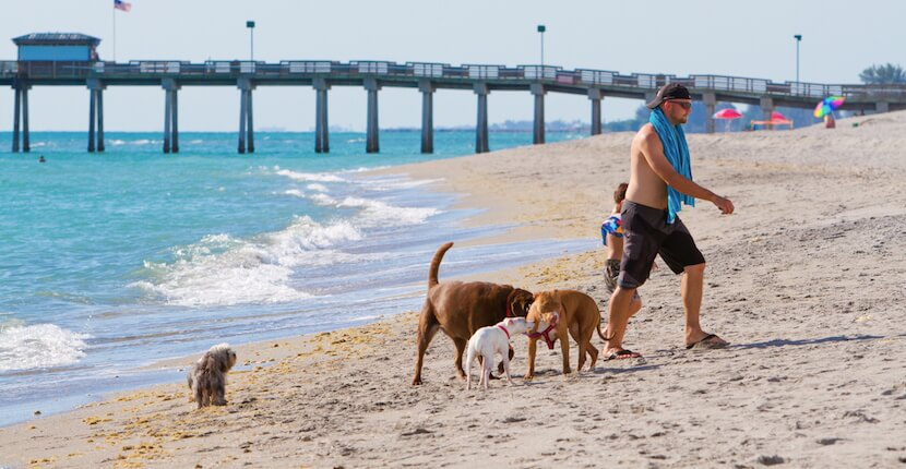 Brohard Beach In Venice Florida Is Sarasota County S Only Public Where Dogs Are Allowed