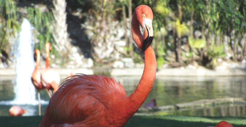 Busch Gardens Tampa Bay Directions Information And Map