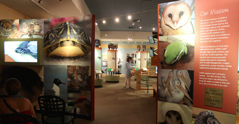 MustDo.com | CROW Clinic for Rehabilitation of Wildlife museum, exhibits Sanibel Island, FL USA. Must Do Visitor Guides