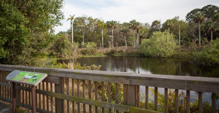 MustDo.com | Conservancy of Southwest Nature Center Naples, Florida is a 21-acre nature preserve that features more than 150 species of local wildlife and a 500-gallon touch tank. Photo by Mary Carol Fitzgerald.