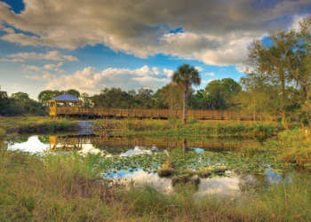 MustDo.com | Conservancy of Southwest Nature Center Naples, Florida is a 21-acre nature preserve that features more than 150 species of local wildlife and a 500-gallon touch tank. Photo by Dennis Goodman.