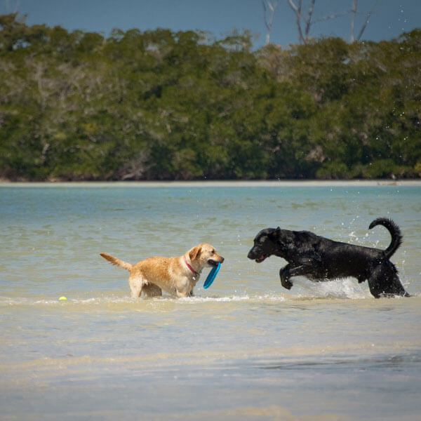 Dog Beach is located just north of Naples and south of Fort Myers Beach in Bonita Springs, Florida and is the only Lee county-owned beach where pets are allowed. Must Do Visitor Guides.
