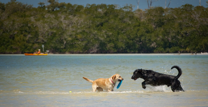 MustDo.com | Dog Beach is located just north of Naples in Bonita Springs, Florida and is the only Lee county-owned beach where pets are allowed. Photo by Debi Pittman Wilkey.