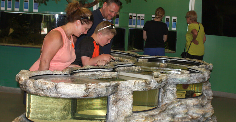 Rookery Bay Environmental Learning Center's new 180-gallon marine life exhibit is a hands-on, interpretive tank designed to look and feel like Rookery Bay Reserve's natural environment. Naples, Florida family fun attractions. | Must Do Visitor Guides, MustDo.com