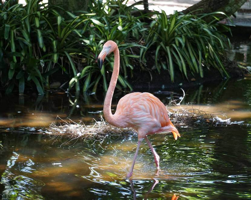 Flamingo at Everglades Wonder Gardens, Bonita Springs Florida family fun attraction. Must Do Visitor Guides, MustDo.com.