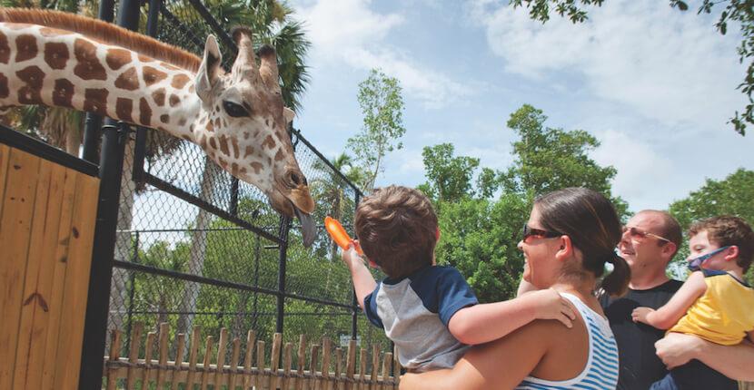 MustDo.com | Family fun feeding giraffes at the Naples Zoo, Naples, Florida, USA.