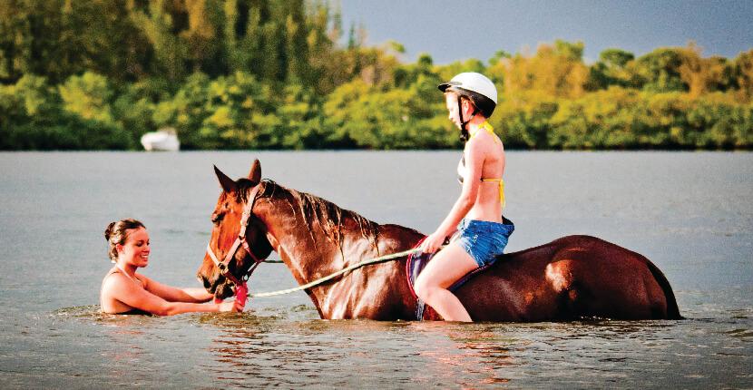 horse-swim-palma-sola-bay-beachhorses-com