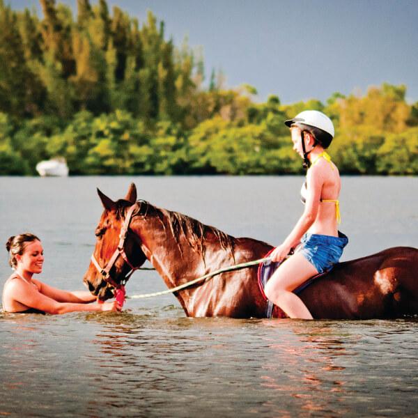 horse-swim-palma-sola-bay-bradenton-beachhorses-com