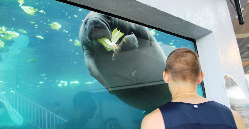 Mote Marine Aquarium features touch pools for stingrays and other sea life, a 135,000-gallon shark habitat, dolphin, manatee, and sea turtle exhibits, and more than 100 species of marine life. Must Do Visitor Guides, MustDo.com