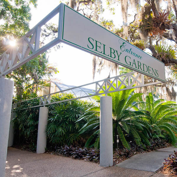 Marie Selby Botanical Gardens, Sarasota, Florida, USA. Photo by Debi Pittman Wilkey