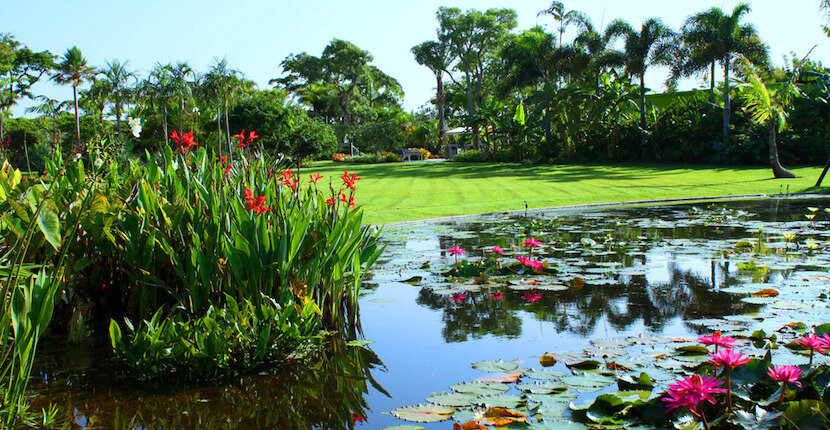 Naples botanical garden information must do visitor guides - Botanical gardens naples florida ...