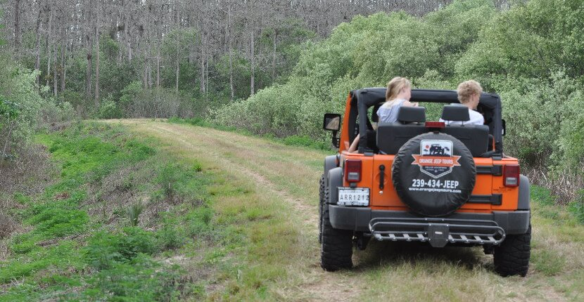 MustDo.com | Orange Jeep Tours offer engaging 90-minute narrated off-road tour takes you through wetlands and uplands and includes local history and an opportunity to see native Southwest Florida wildlife including alligator, deer, bear, and a variety of birds. Ave Maria near Naples, Florida.