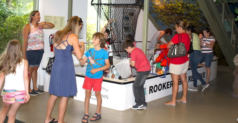 Rookery Bay Environmental Learning Center Kid's Free Friday summer activities program Naples, Florida | Must Do Visitor Guides