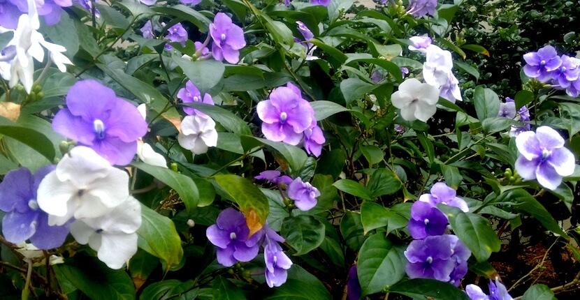 Sanibel Moorings Botanical Gardens tour Sanibel Island, Florida. Must Do Visitor Guides, MustDo.com