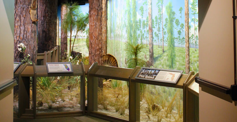 Discover Florida's story from the prehistoric to the present with life-sized casts of Ice Age mammals and fossils at the South Florida Museum, Bishop Planetarium & Parker Manatee Aquarium Bradenton, Florida USA. Must Do Visitor Guides, MustDo.com.