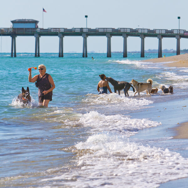 Brohard Beach in Venice, Florida is Sarasota County's Only Public Beach Where Dogs are Allowed. Photo by Justin Fennell. Must Do Visitor Guides, MustDo.com.
