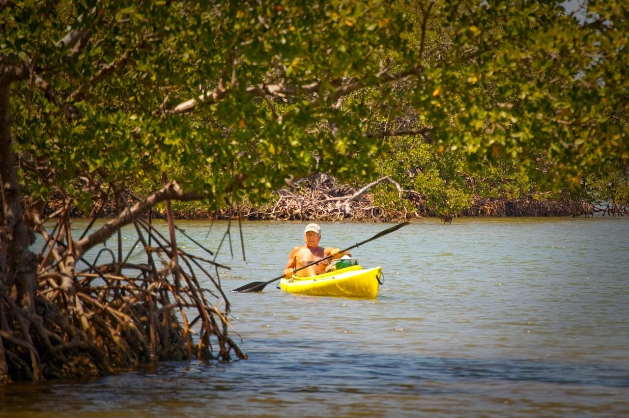 Kayaking is a great way to discover nesting waterbirds, wading herons, and other Florida wildlife in their native habitat. Must Do Visitor Guides, MustDo.com.