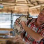 Wooten's Everglades Animal Sanctuary and airboat rides. Visitors have an opportunity to hold or hug an alligator – now that's a souvenir! Photo by Jennifer Brinkman. MustDo.com