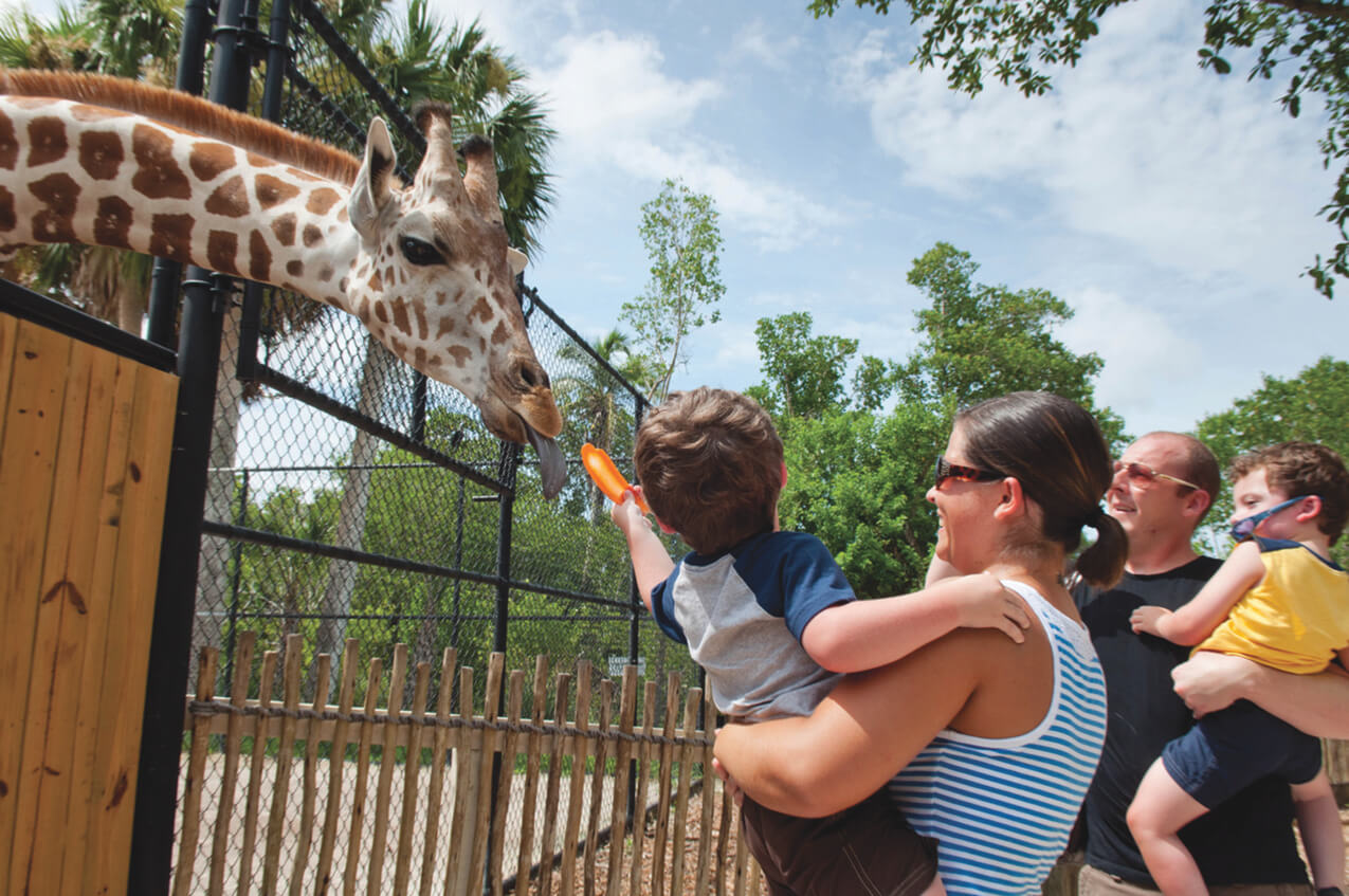 Family fun feeding giraffes at Naples Zoo, Naples, Florida, USA. Photo by Debi Pittman Wilkey. Must Do Visitor Guides, MustDo.com