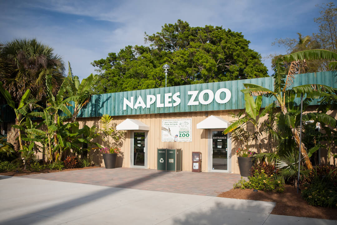 Naples Zoo at Caribbean Gardens in Naples, Florida is one of the top attractions in Southwest Florida, particularly for families. Located in established tropical gardens with shady mature trees, exotic landscaping and lakes, the zoo was founded by Dr. Henry Nehrling in 1919 as a tropical garden. Photo by Mary Carol Fitzgerald. Must Do Visitor Guides, MustDo.com