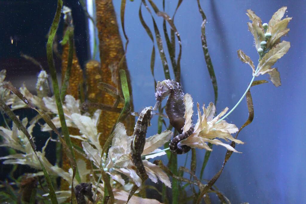 Mote Marine Aquarium Sarasota, Florida. Photo credit Nita Ettinger. Must Do Visitor Guides, MustDo.com