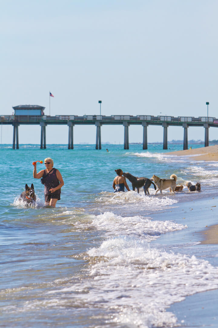 Brohard dog beach and the Venice Pier Venice, Florida. The only beach in Sarasota county where dogs are allowed. Photo by Justin Fennell. | Must Do Visitor Guides