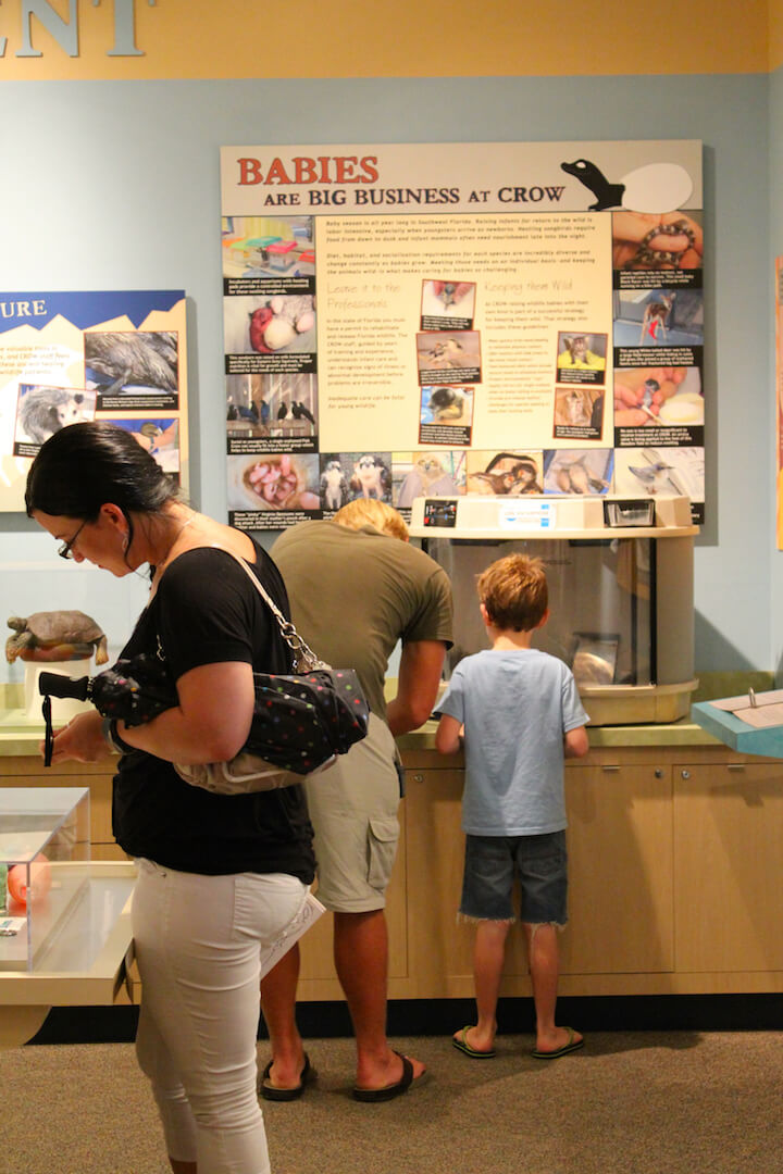 CROW Clinic for Rehabilitation of Wildlife museum, exhibits Sanibel Island, FL USA. Must Do Visitor Guides, MustDo.com