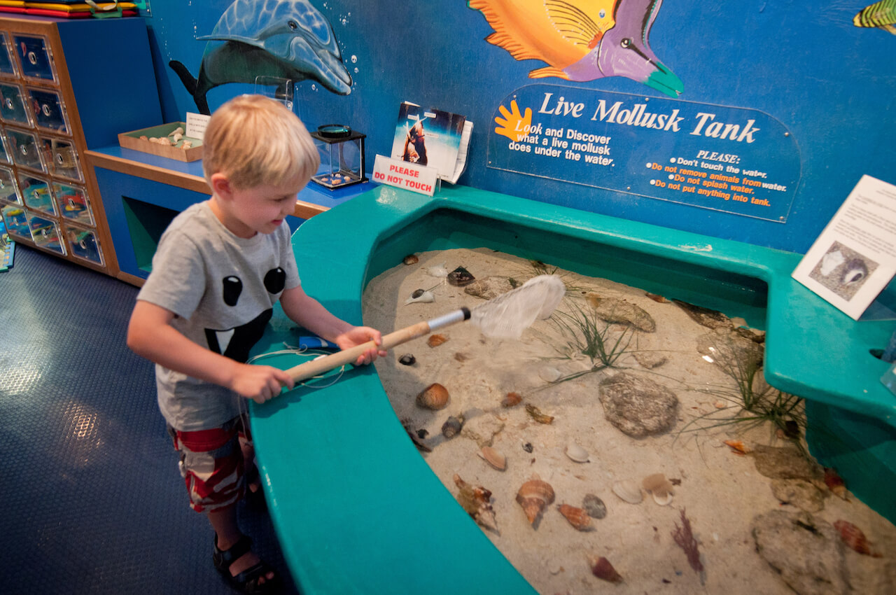 Live musk tank in the hands-on play area at Bailey Matthews Shell Museum, Sanibel Island, Florida, USA. Photo by Debi Pittman Wilkey | Must Do Visitor Guides