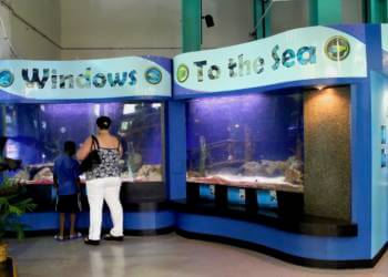 Sea life exhibit IMAG History and Science Center Fort Myers, Florida. | Must Do Visitor Guides, MustDo.com