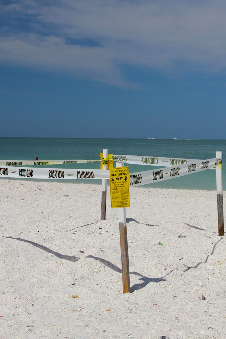 Protected Sea Turtle Nest along Gulf of Mexico Marco Island, Florida USA. Must Do Visitor Guides | MustDo.com