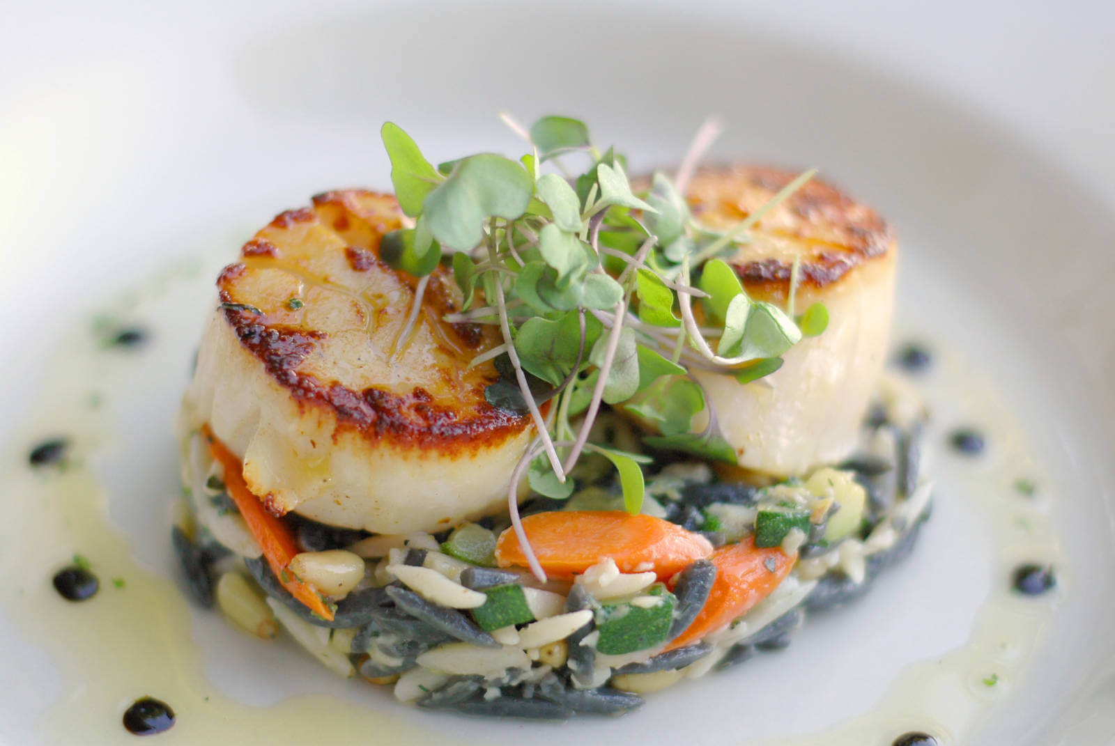 Seared Diver Scallops with Orzo. Enjoy the award-winning dinner menu, fine wines, Sunday Brunch, celebrate a wedding or anniversary overlooking Little Sarasota Bay at Ophelia's on the Bay in Siesta Key, Florida. | Must Do Visitor Guides