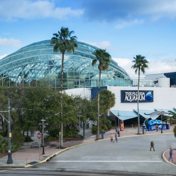 Go from tree level to sea level while being entertained and educated at The Florida Aquarium! With more than 20,000 animals including sharks, alligators, seahorses and more, you're sure to have an amazing aquatic experience.   MustDo.com