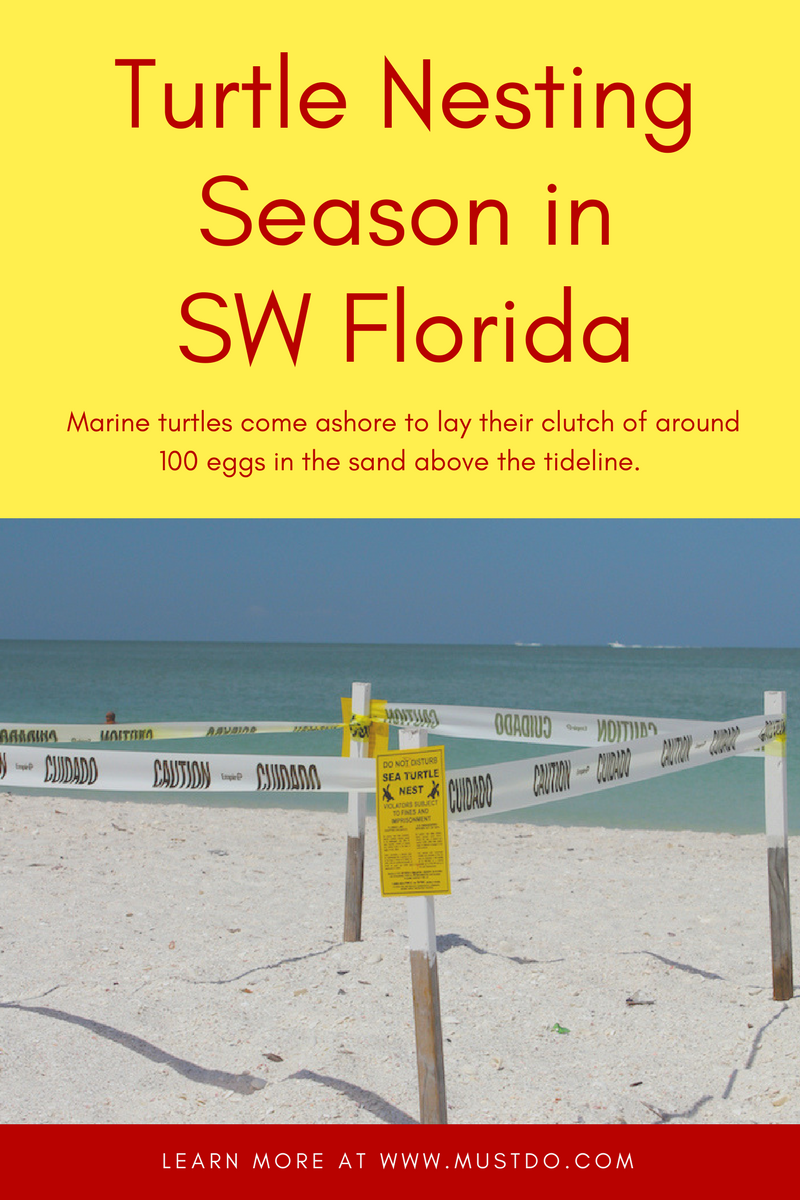 Information about sea turtle nesting season in Southwest Florida beaches. Must Do Visitor Guides, MustDo.com