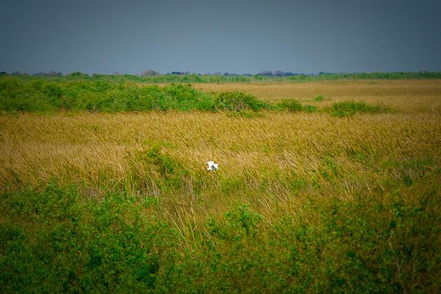Everglades eco-tours, Big Cypress Preserve, Southwest Florida. Photo by Debi Pittman Wilkey. Must Do Visitor Guides, MustDo.com