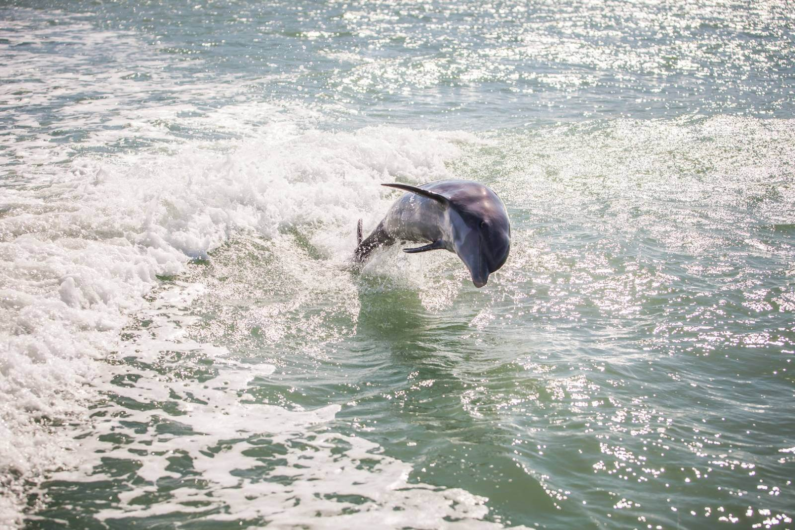 Getting out on the water and exploring Southwest Florida on a guided boat tour will provide up-close sightings of Florida's wildlife including dolphins. Photo by Mary Carol Fitzgerald #wildlife #florida #vacation #dolphins