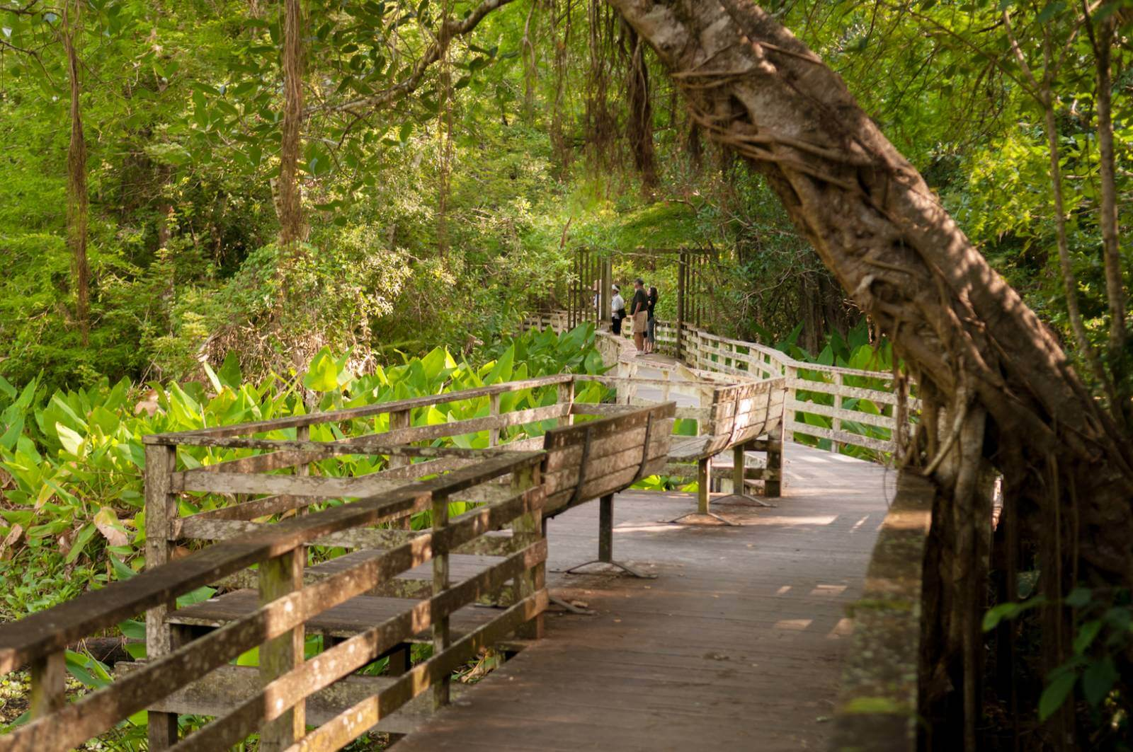 Corkscrew Swamp Sanctuary in Naples, Florida is one of the top bird watching sites in the USA. The boardwalk offers excellent views of endangered wood storks that nest in the sanctuary. Photo by Gary Jung.