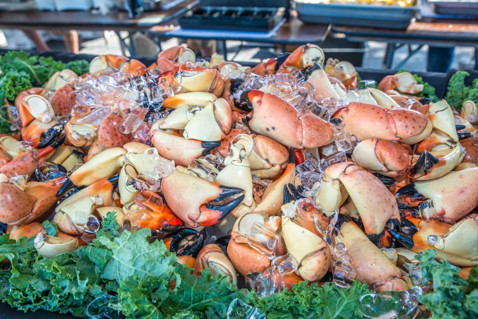 You might think that Miami is the Stone Crab Capital of the World – but you'd be wrong. It is Everglades City! Stone crabs are harvested from October 15 to May 15 and fishermen remove the claw and return the crabs to the ocean to regenerate new ones. Photo by Jennifer Brinkman.