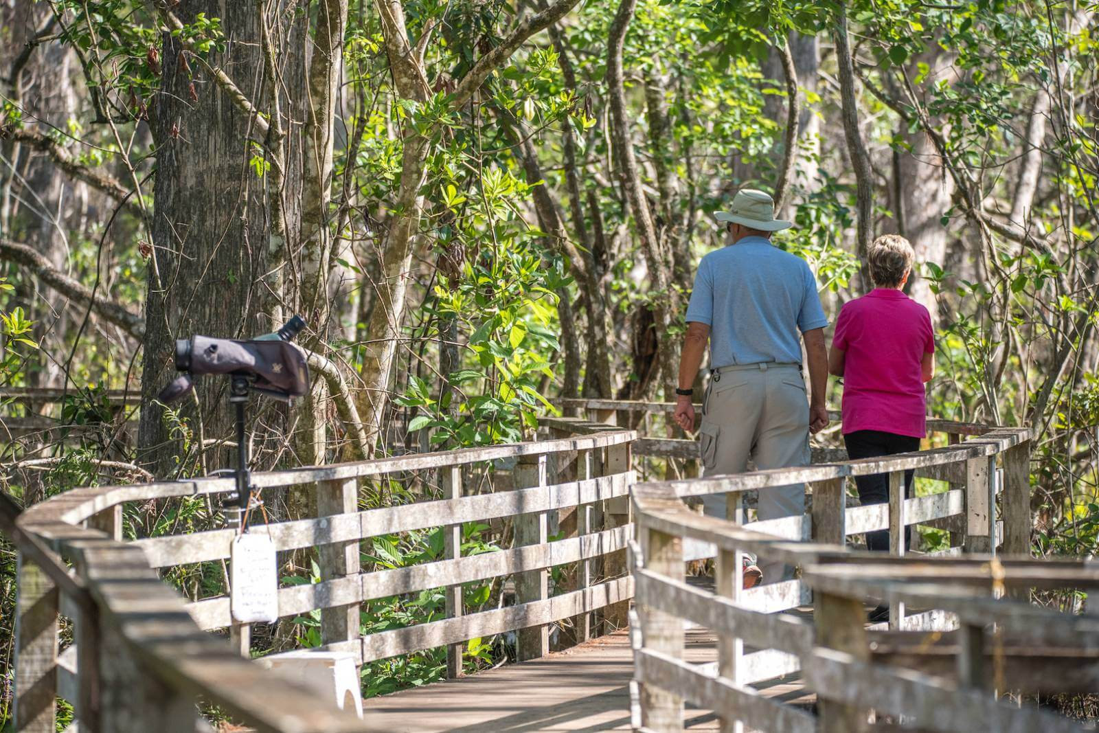 Expect many opportunities to see wildlife and great birding at Audubon Corkscrew Swamp in Naples, Florida. Photo by Jennifer Brinkman | Must Do Visitor Guides, MustDo.com