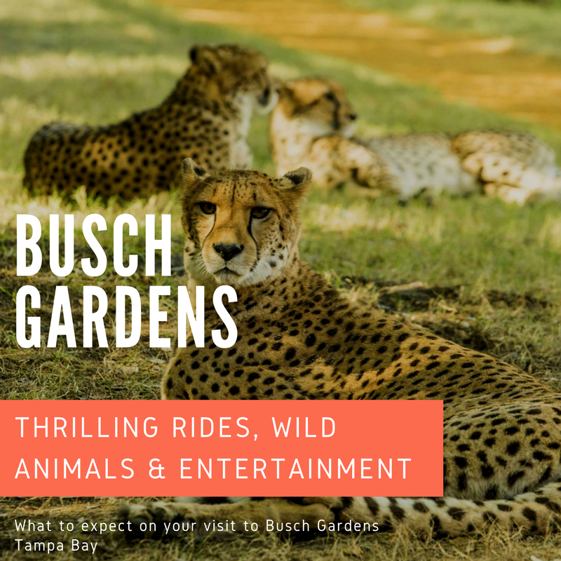 What to expect on your visit to Busch Gardens Tampa Bay. Must Do Visitor Guides, MustDo.com.