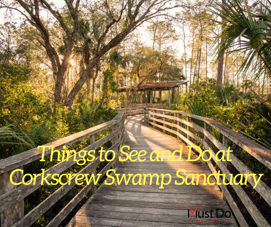 Things to See and Do at Corkscrew Swamp Sanctuary in Naples, Florida. Photo credit Jennifer Brinkman. | Must Do Visitor Guides, MustDo.com