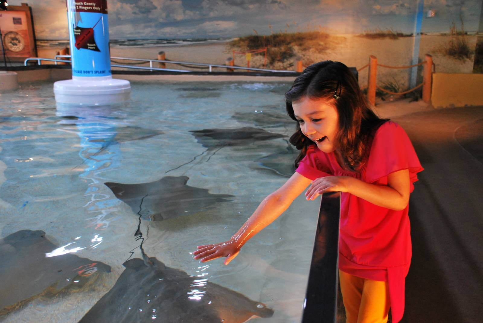 Kids get a chance to touch stingrays at Stingray Beach at The Florida Aquarium in Tampa. Photo credit The Florida Aquarium.