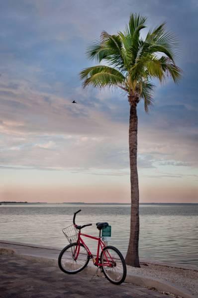 Bicycle and palm tree at sunset, South Seas Island Resort, Captiva Island, Florida. Photo by Debi Pittman Wilkey. Must Do Visitor Guides, MustDo.com