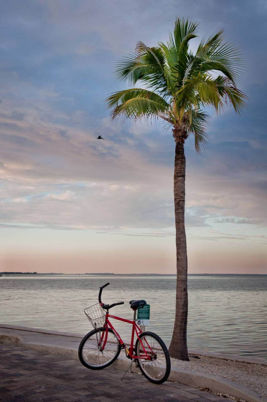 Bicycle and palm tree at sunset, South Seas Island Resort, Captiva Island, Florida. Photo by Debi Pittman Wilkey. Must Do Visitor Guides, MustDo.com