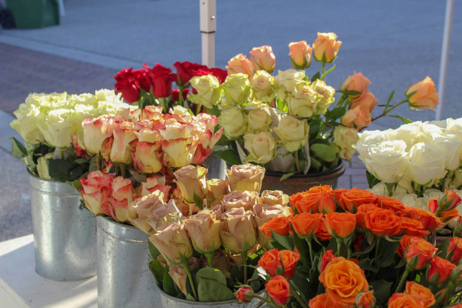 Roses for sale at the Downtown Sarasota Farmers Market Sarasota, Florida. Must Do Visitor Guides, MustDo.com.