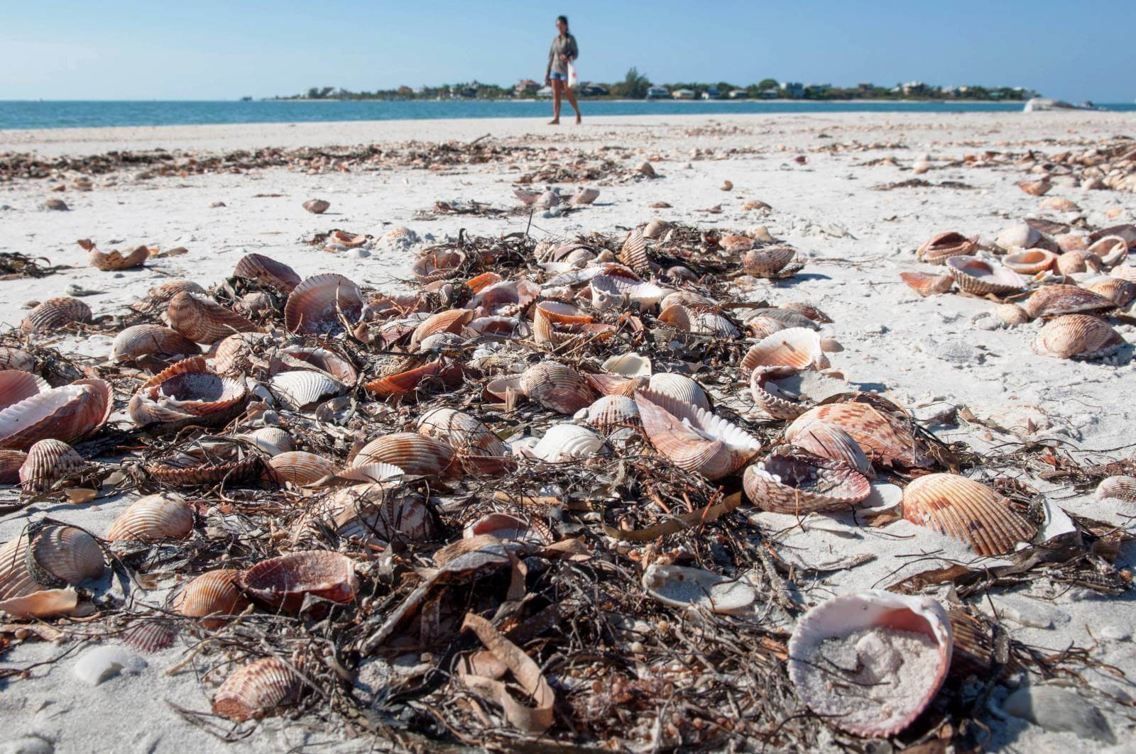 Take a cruise to go shelling on Cayo Costa, State Park near Fort Myers, Florida on a girls weekend getaway trip. Photo by Debi Pittman Wilkey. Must Do Visitor Guides, MustDo.com
