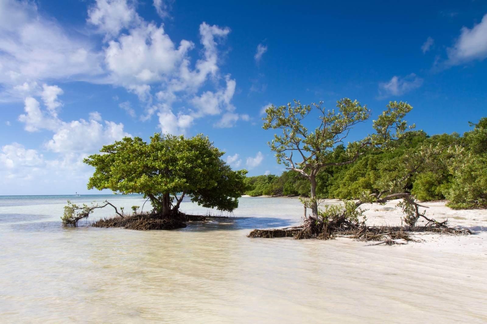 Get back to nature by exploring Ten Thousand Islands National Wildlife Refuge. Soak up uninhabited isles via kayaking, canoe, or boat. Naples, Florida. Must Do Visitor Guides, MustDo.com.