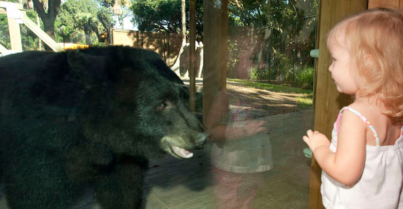 Young girl looks at bear through window at Naples Zoo in Naples, Florida.