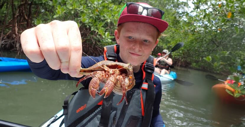 Explore the natural beauty of Naples and Marco Islands' exotic mangrove tunnels, serene back bays, mudflats, and oyster reefs on a family-friendly biologist led guided kayak tour with an opportunity to see and learn about birds, dolphins, manatees, and other native Florida wildlife. Must Do Visitor Guides, MustDo.com
