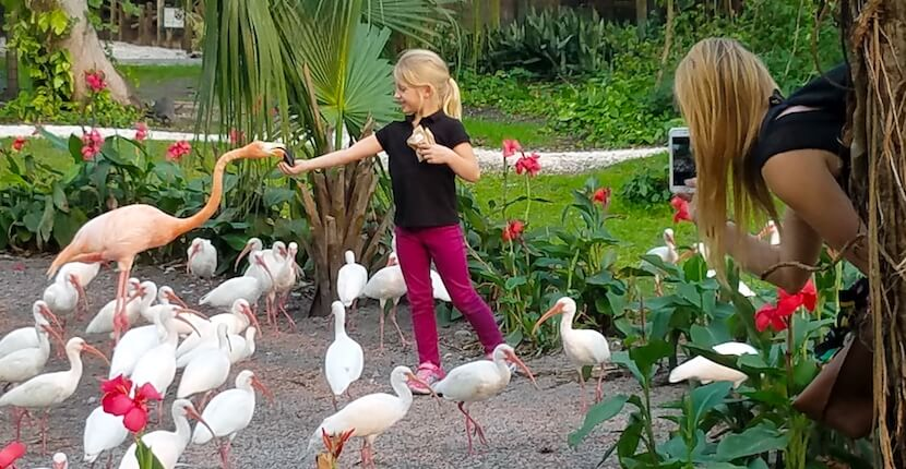 Everglades Wonder Gardens in Bonita Springs, Florida is home to some amazing birds such as pink flamingos–which you can hand-feed! Must Do Visitor Guides, MustDo.com
