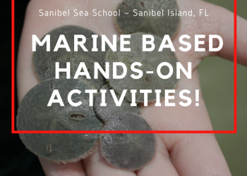 Sanibel Sea School on Sanibel Island, Florida offers marine-based hands-on activities for all ages. Must Do Visitor Guides, MustDo.com
